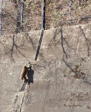 野生猿のイメージ画像