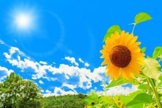 夏季休業のお知らせ!!のイメージ画像